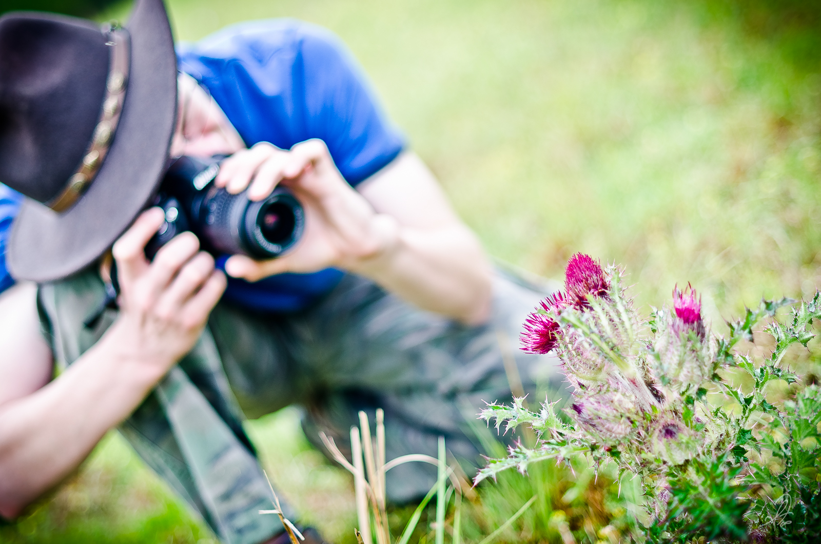 Nikon D3100 and Spring Thistle Weed