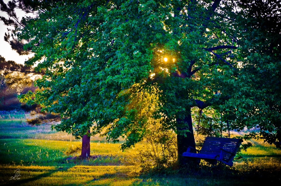 Project 365 [Day 158] Tree Swing on the Farm at Sunset