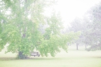 Project 365 [Day 226] Pouring Summer Rain On Our Tree Swing