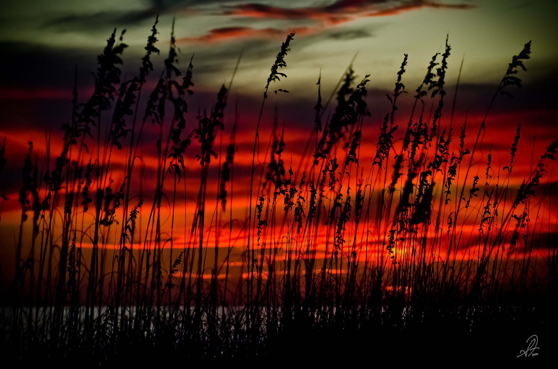 Sunset Through the Grass at Gulf Shores