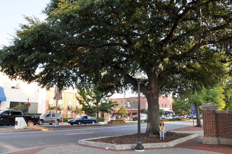 Toomer's Oaks in their glory day