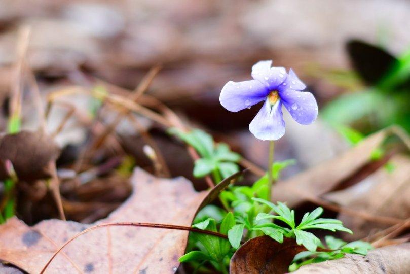 wild-flower-spring-2016-a